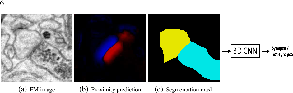 Figure 2 for Detecting Synapse Location and Connectivity by Signed Proximity Estimation and Pruning with Deep Nets