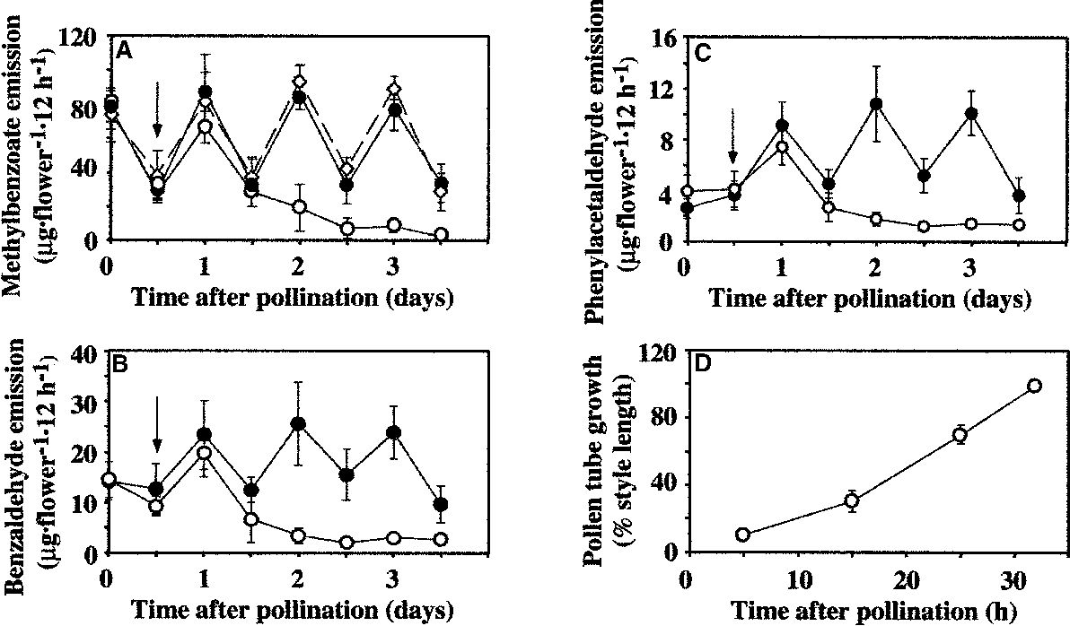 Regulation of methylbenzoate emission after pollination in figure 2 ccuart Choice Image