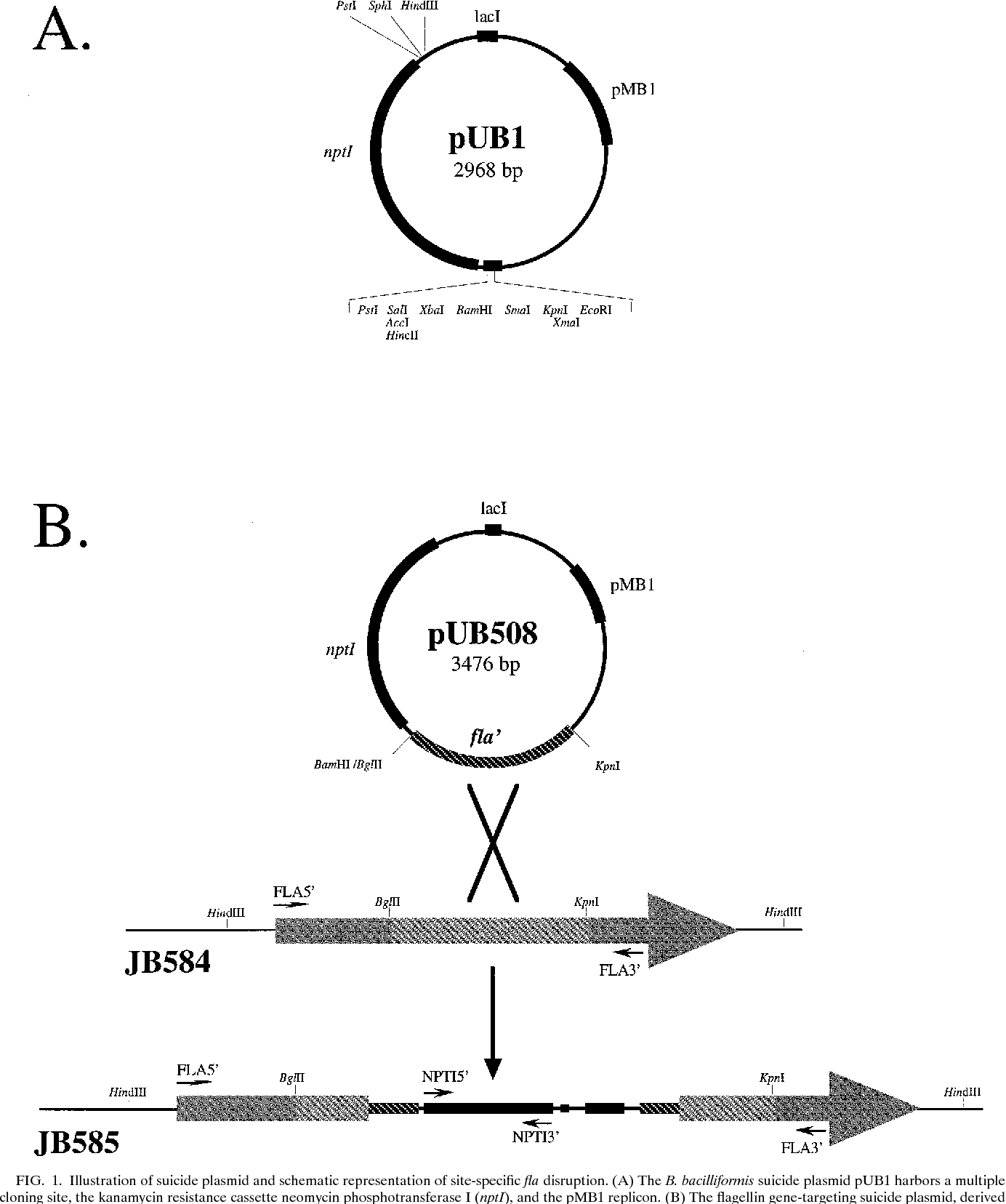 Figure 1 from Development of a system for genetic