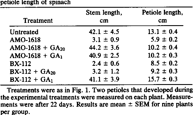 Gibberellin A1 Is Required For Stem Elongation In Spinach