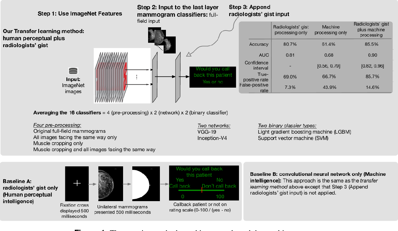 Figure 1 for Human Gist Processing Augments Deep Learning Breast Cancer Risk Assessment