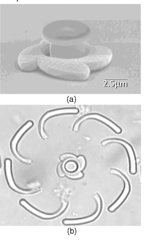 Figure 4. Flower-shaped microrotor fabricated by two-photon microfabrication. (a) SEM image of a microrotor (b)Optical image of a microrotor in a medium.