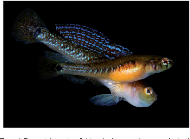 Sexual selection in fish