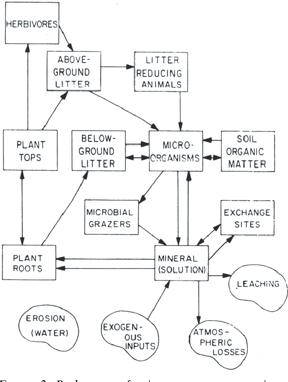 Figure 2 From Models And Processes Of The Nitrogen Cycle The