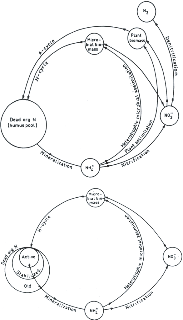figure 5 from models and processes of the nitrogen cycle the Nitrogen Cyle upper jansson s representation of a universal nitrogen cycle divided into