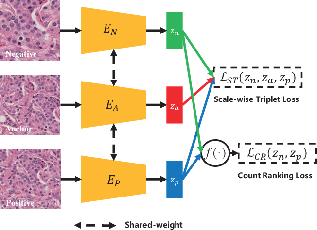 Figure 3 for Instance-aware Self-supervised Learning for Nuclei Segmentation