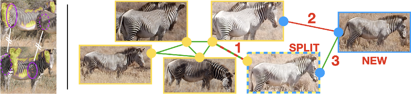 Figure 1 for The Animal ID Problem: Continual Curation
