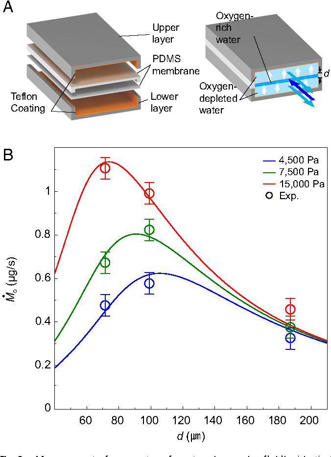 Figure 4 From Optimal Lamellar Arrangement In Fish Gills Semantic