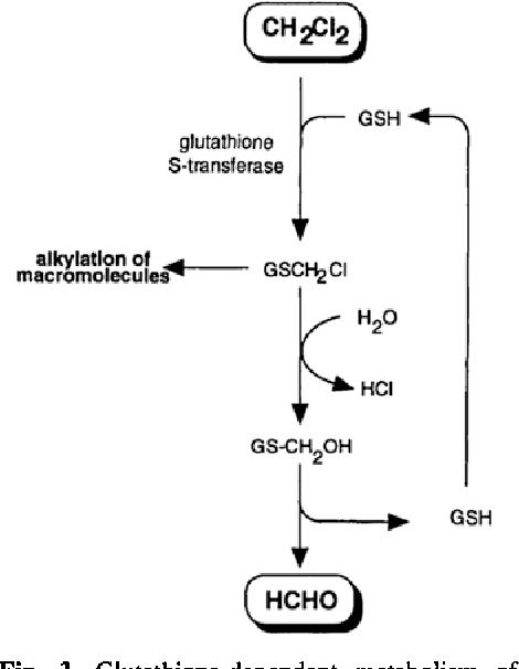figure 3 from metabolism of dichloromethane methylene chloride to