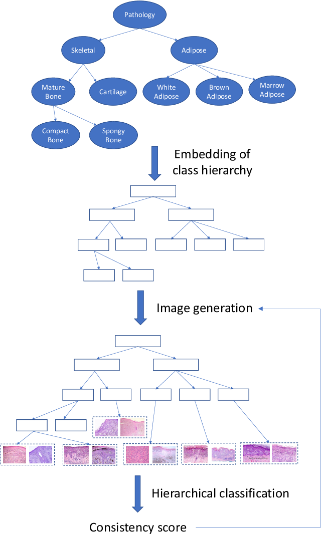 Figure 1 for TreeGAN: Incorporating Class Hierarchy into Image Generation