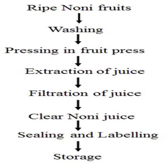 Figure 12 From Health Benefits Of Morinda Citrifolia Noni A