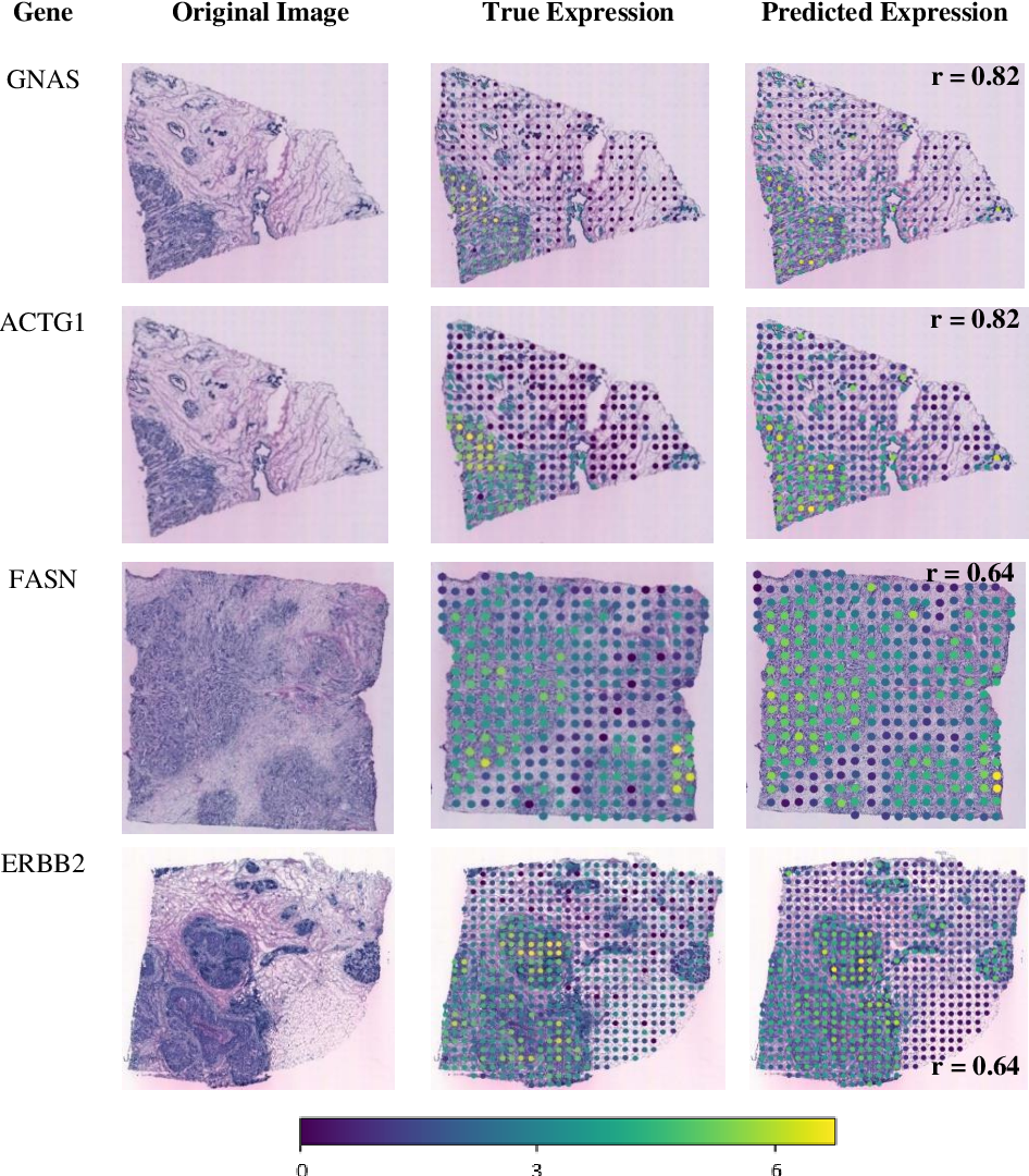 Figure 4 for All You Need is Color: Image based Spatial Gene Expression Prediction using Neural Stain Learning