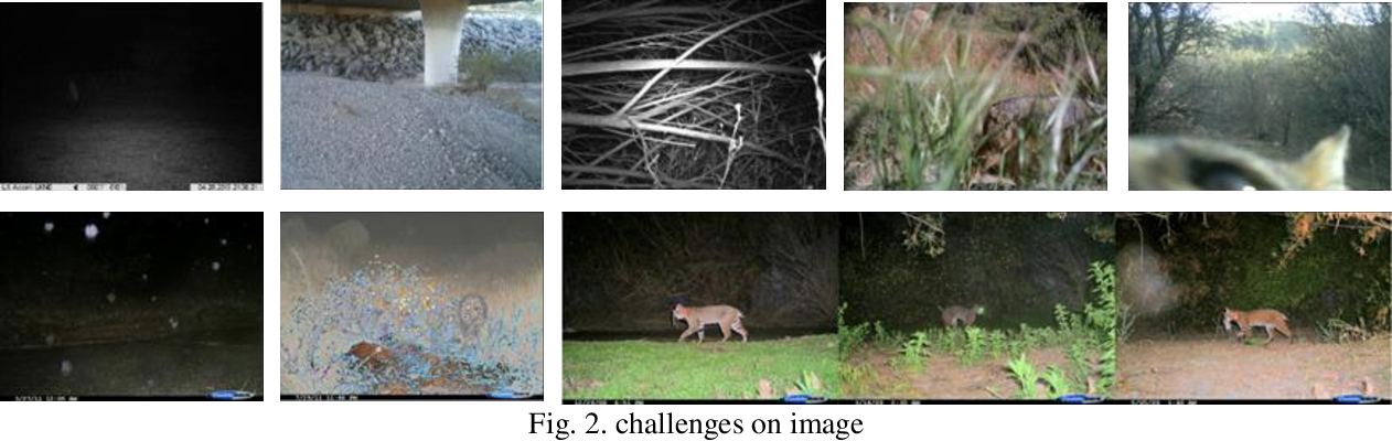 Figure 3 for Efficient Method for Categorize Animals in the Wild
