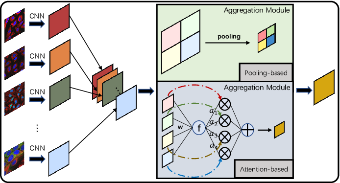 Figure 1 for HAMIL: Hierarchical Aggregation-Based Multi-Instance Learning for Microscopy Image Classification