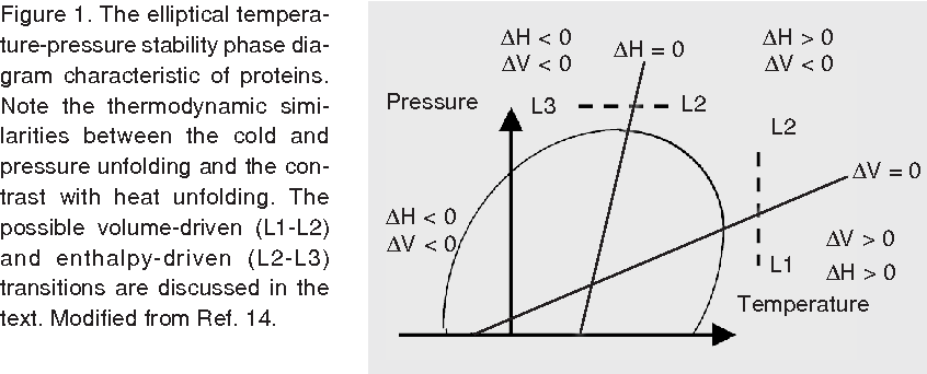 the elliptical temperature-pressure stability phase diagram characteristic  of proteins  note