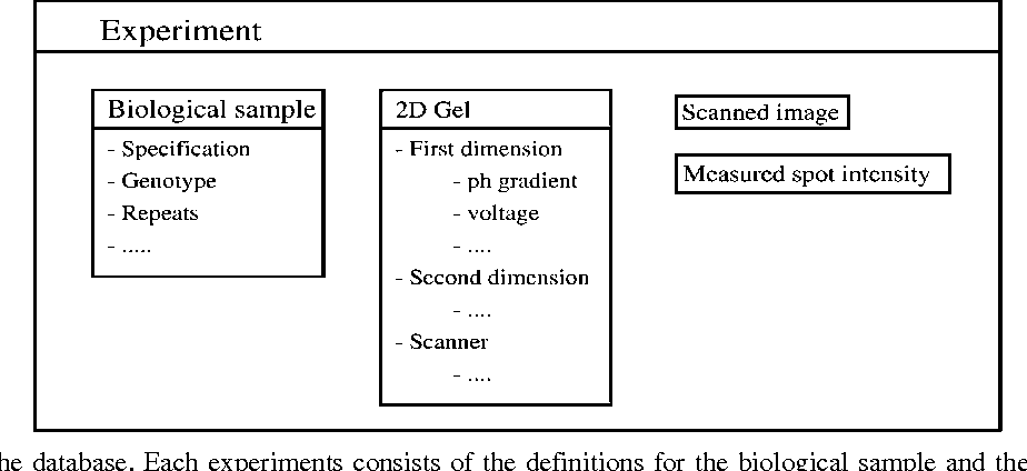 Figure 1. Layout of the database. Each experiments consists of the definitions for the biological sample and the 2DE gel.