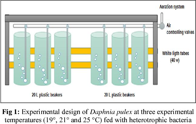 PDF] Population density comparison of Daphnia pulex (Linnaeus, 1758