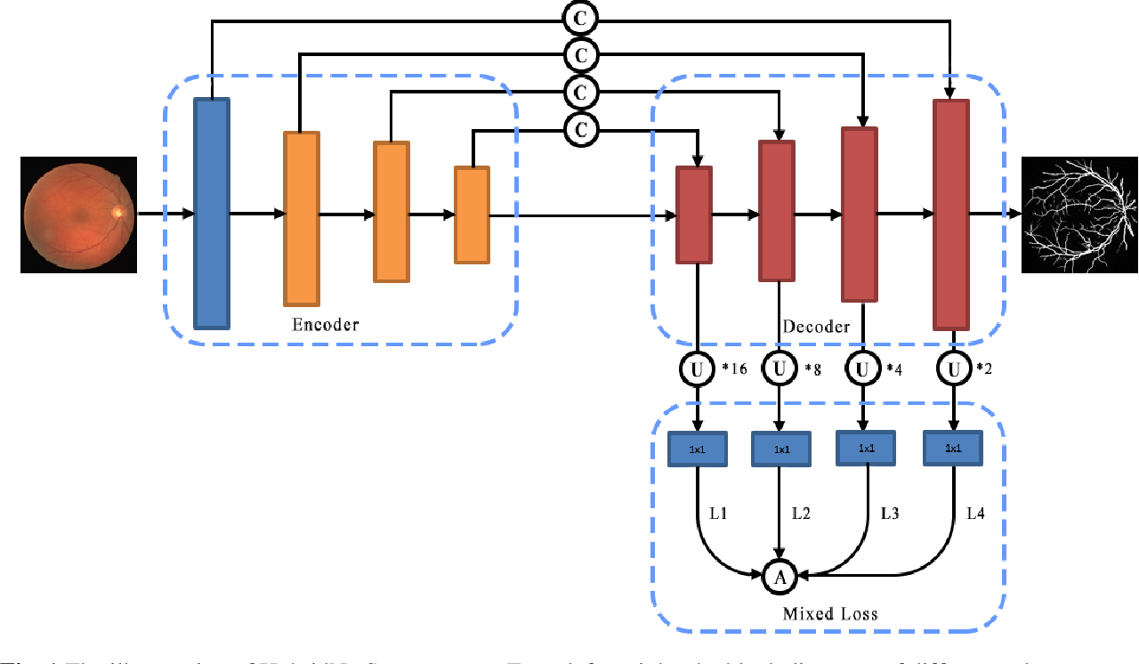 Figure 1 for HybridNetSeg: A Compact Hybrid Network for Retinal Vessel Segmentation
