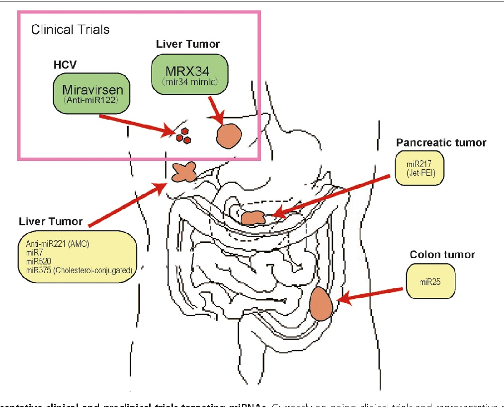 Figure 2 Representative clinical and preclinical trials targeting miRNAs. Currently on-going clinical trials and representative preclinical studies targeting miRNAs against cancers in the gastroenterological field.