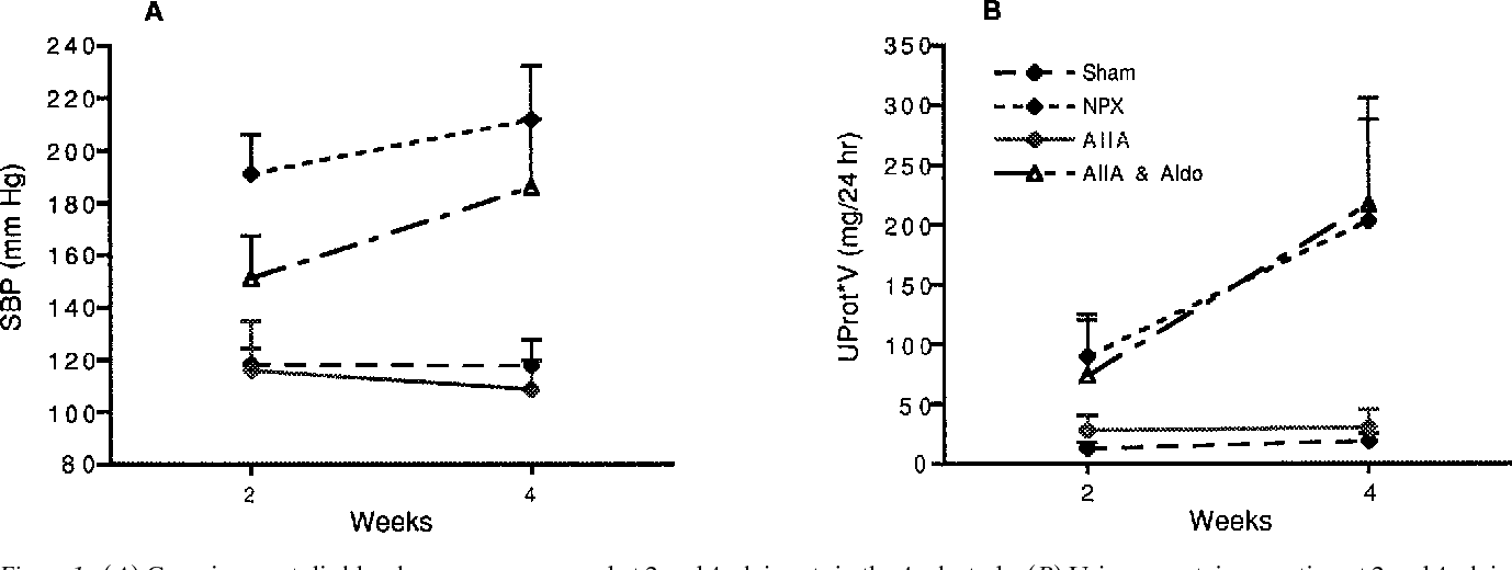 Figure 1. (A) Conscious systolic blood pressure, measured at 2 and 4 wk in rats in the 4-wk study. (B) Urinary protein excretion at 2 and 4 wk in rats in the 4-wk study. Numerical values for the 4-wk data are provided in Table II. The error bars are standard errors of the means.