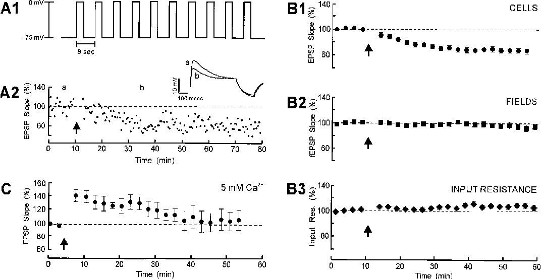 Figure 4. Depolarizing Voltage Pulses Can Evoke LTD