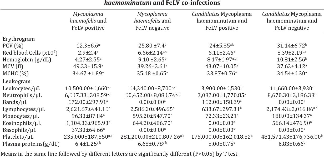 Table 4. hematology of animals infected by Mycoplasma haemofelis, Candidatus Mycoplasma haemominutum and FelV co-infections