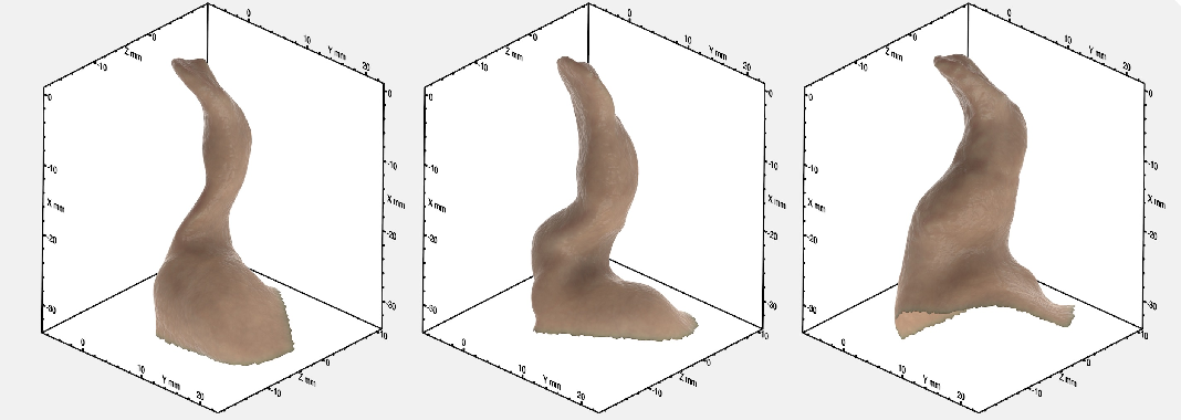 Figure 2 for An Average of the Human Ear Canal: Recovering Acoustical Properties via Shape Analysis