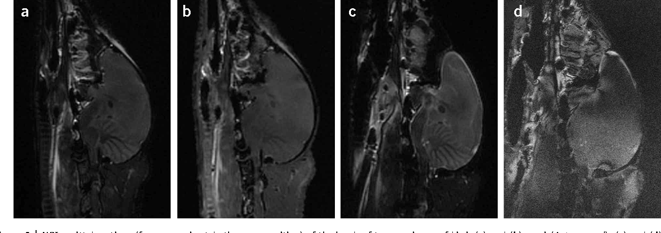 MRI of postmortem specimens of endangered species for comparative ...