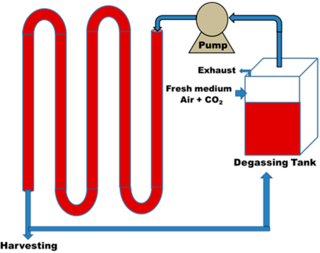 Figure 4 from Exploitation of Microalgae Species for Nutraceutical