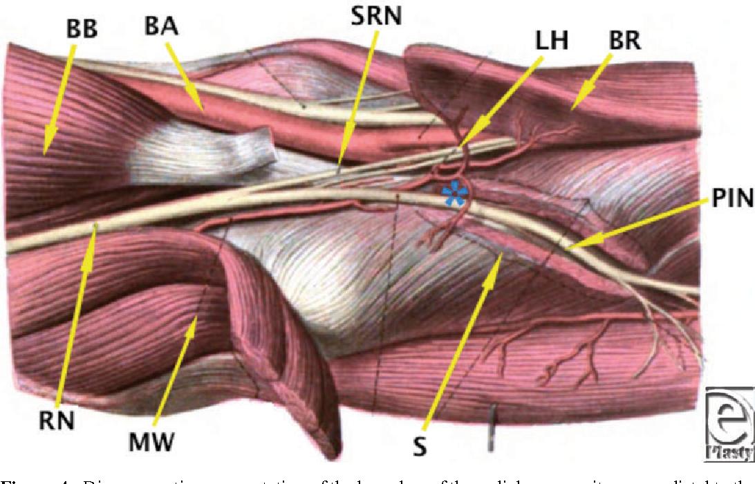 Posterior Interosseous Nerve Compression - Semantic Scholar