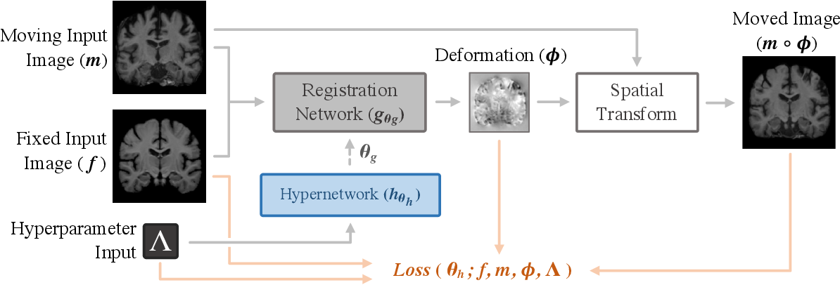 Figure 3 for HyperMorph: Amortized Hyperparameter Learning for Image Registration