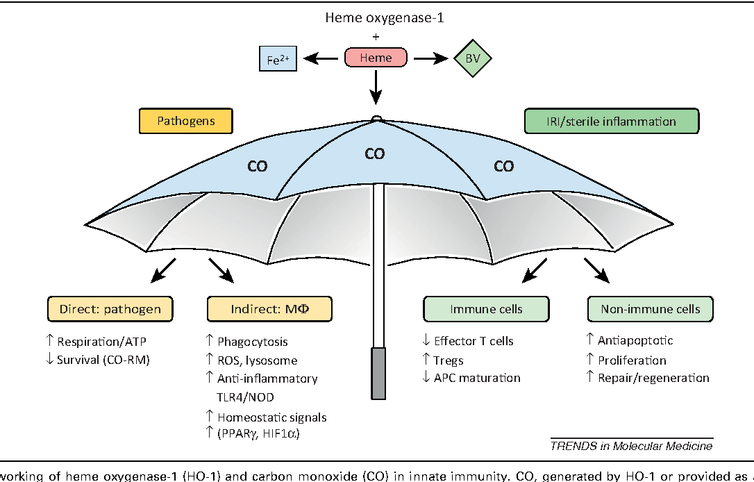 Figure 1 from the social network of carbon monoxide in medicine figure 1 sciox Gallery