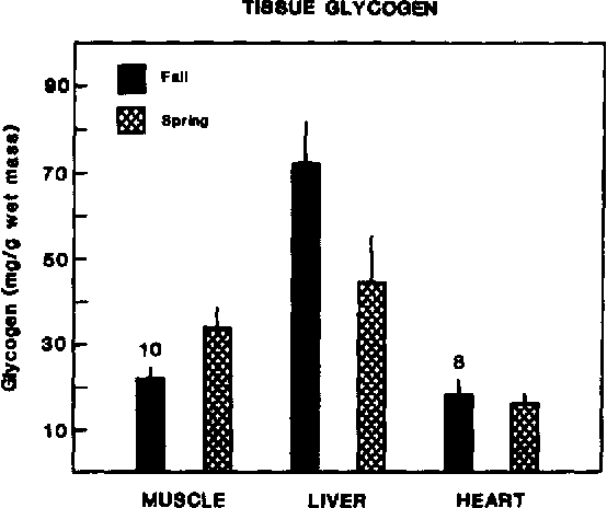Fig. 4. Glycogen content (mg/g wet mass) of pectorahs muscle, liver and ventricular muscle of all turtles (glycogen content of the tissues did not differ significantly by sex). Twelve turtles were used in each sample unless otherwise noted.