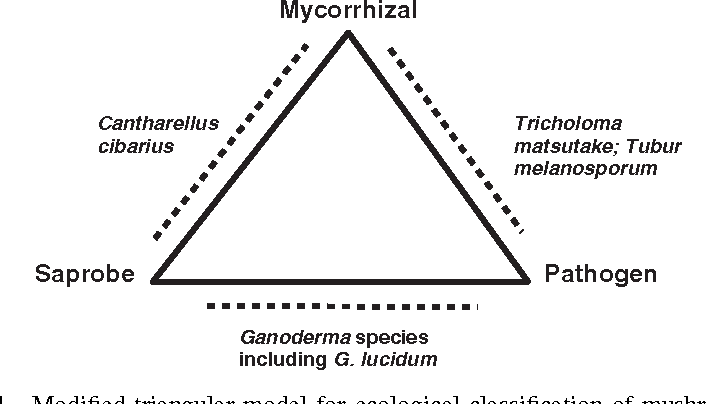 Overview of Mushroom Cultivation and Utilization as Functional Foods
