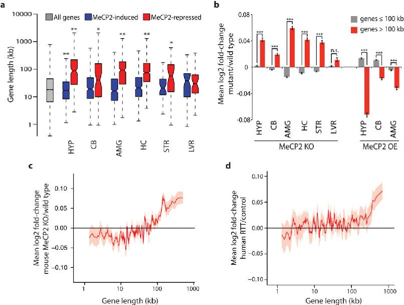 Benyam Kinde Gene Expression And Rett >> Disruption Of Dna Methylation Dependent Long Gene Repression In Rett