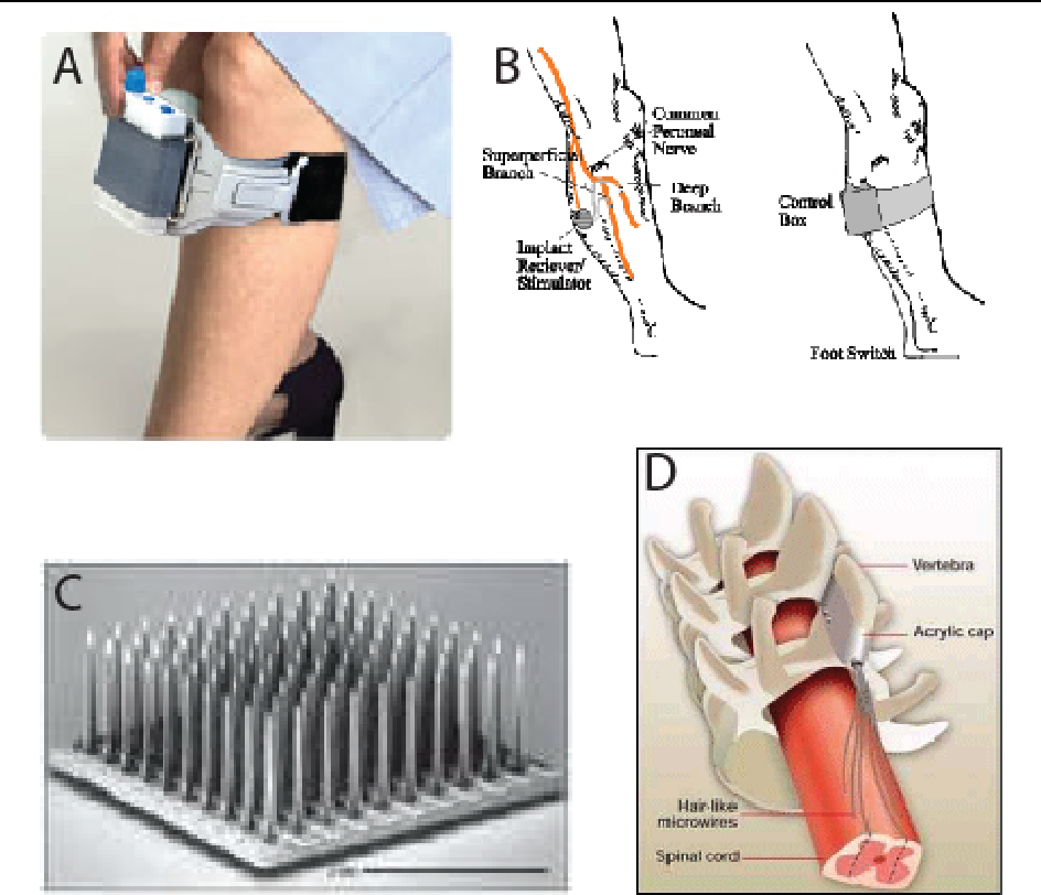 Ventral Root Or Dorsal Root Ganglion Microstimulation To Evoke