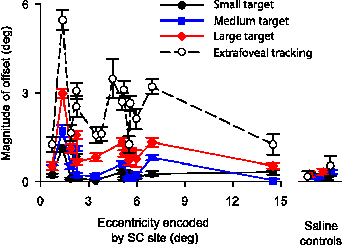 Figure 7. Summary of the effects of SC inactivation on the tracking of different target sizes. The plot shows the magnitude of the inactivation-induced offset in eye position during tracking as a function of the eccentricity encoded by the inactivated SC site as well as the size of the tracked target. Consistent with the sample experiment of Figure 6, the magnitude of the offset systematically increased as we went from the small target toward larger ones, culminating in extrafoveal tracking having the largest offsets. However, the slope of this increase was highest for parafoveal sites when compared with the most central and most eccentric experiments. The increase in offset magnitude with target size did not happen for our saline control experiments. Error bars denote 95% confidence intervals.