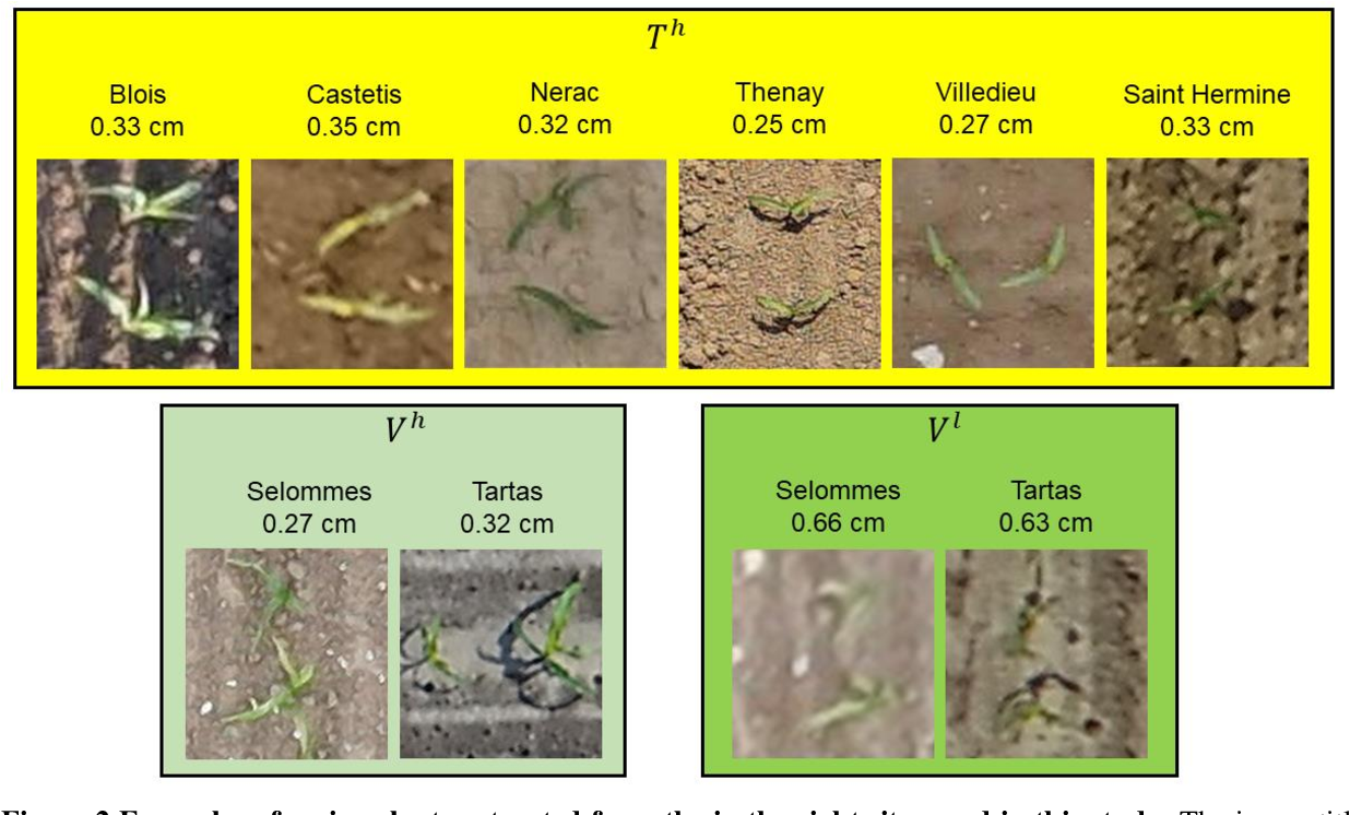 Figure 3 for Estimates of maize plant density from UAV RGB images using Faster-RCNN detection model: impact of the spatial resolution