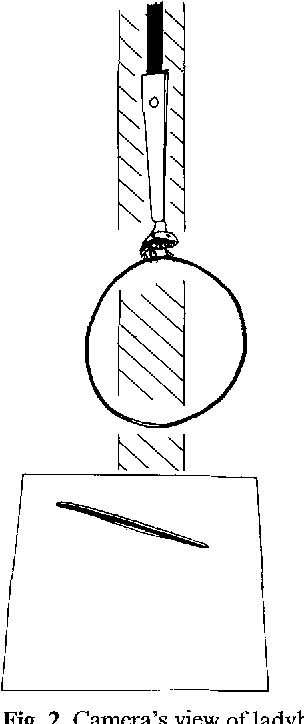Fig. 2. Camera 's view of ladybird, ring and computer generated stripe