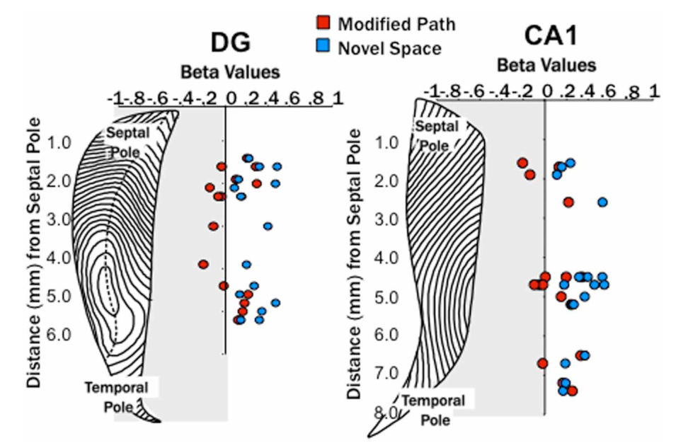 Figure 6 from Novel space alters theta and gamma synchrony across