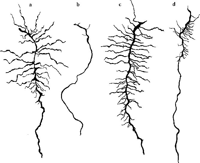 Seedling Root Anatomy And Morphology An Examination Of Ecological
