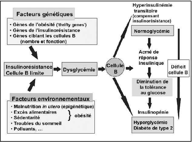 Figure 2 from Le diabete de type 2: voyage au coeur d'une maladie ...