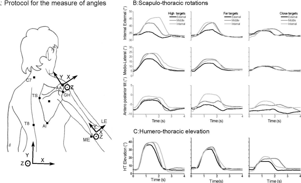 Kinematics of the Shoulder Girdle During Pointing: Coordination ...