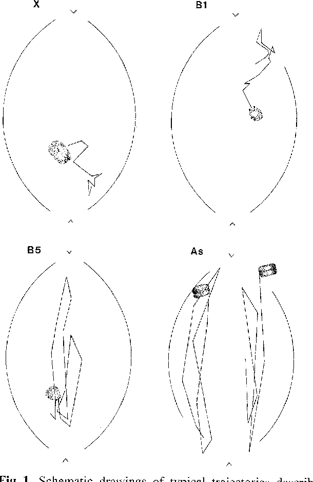 A comparative study of orientation at behavior of univalent in figure 1 ccuart Images