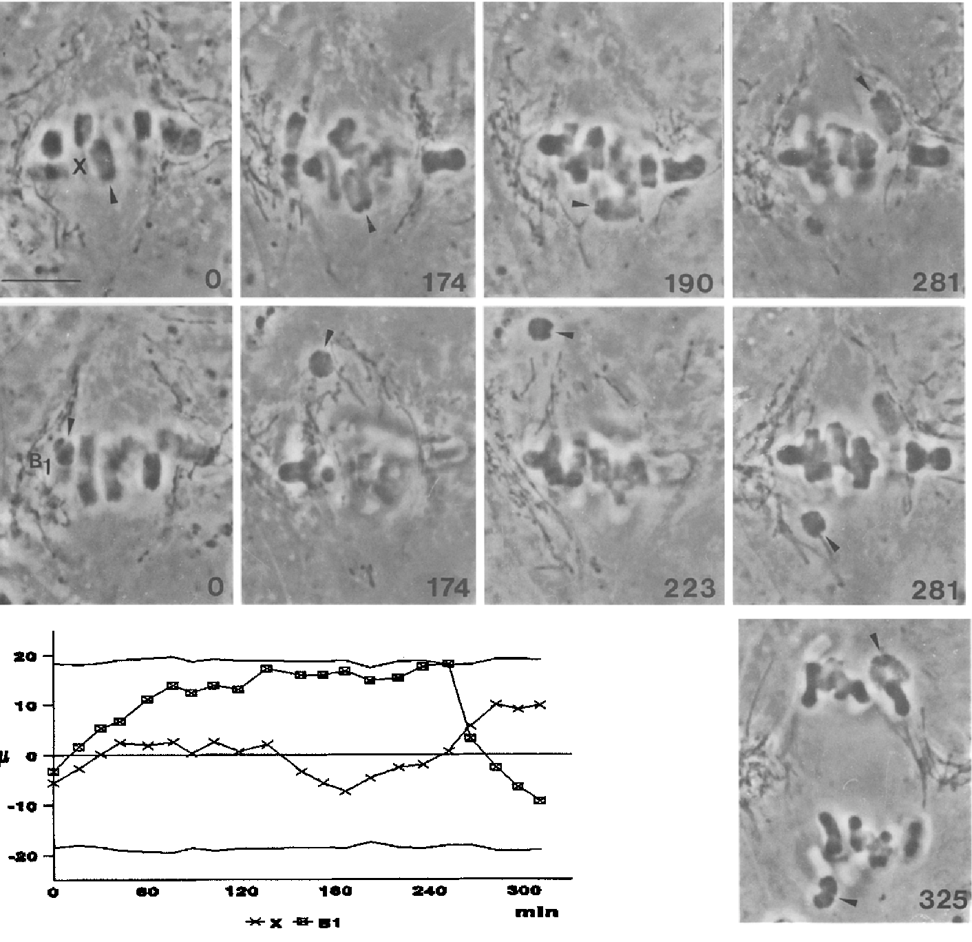 A comparative study of orientation at behavior of univalent in figure 2 ccuart Images