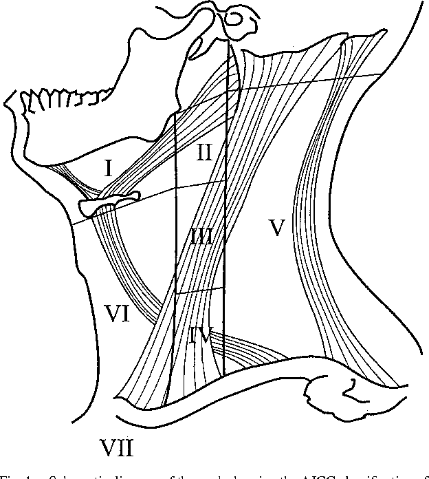 Figure 1 From Sonography Of Neck Lymph Nodes Part I Normal Lymph