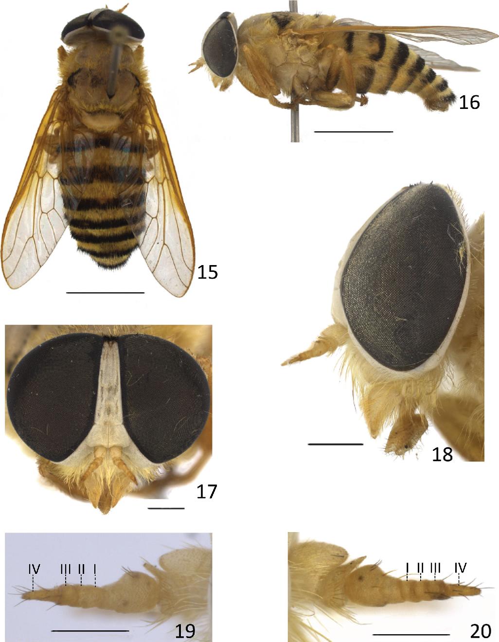 figure 15–20