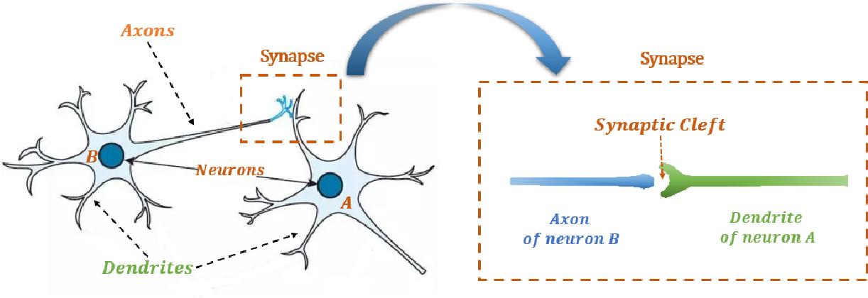 Figure 3 for Flexible Transmitter Network