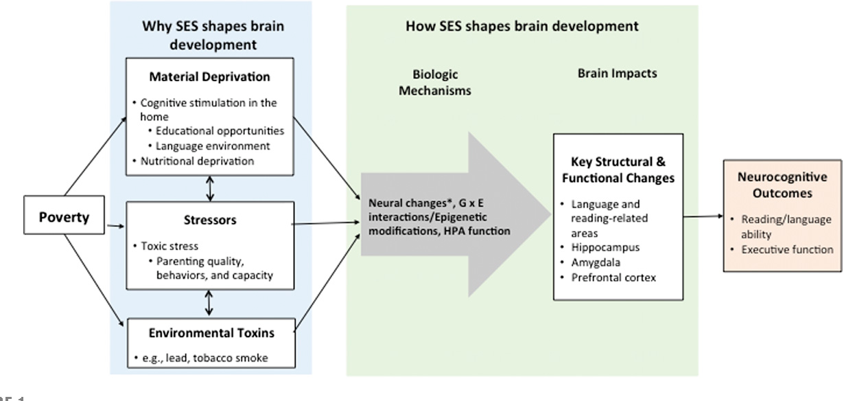 Poverty Linked To Brain Structure In >> Pdf State Of The Art Review Poverty And The Developing Brain