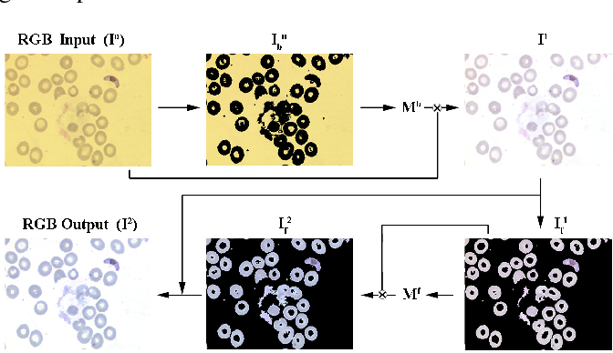 Figure 1 for Adaptive Gray World-Based Color Normalization of Thin Blood Film Images